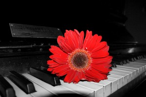 piano_and_flower_by_paulcastleton-d5eg0f9